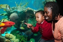 Places To Go with Kids / Fun places to visit with Kids / by Child's Play Communications