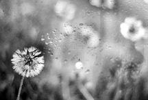 Pics that make me happy / by Blaise Lowe