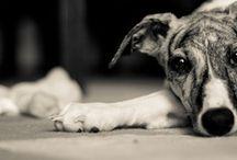 Pretty Puppies / by Lo Loeffler