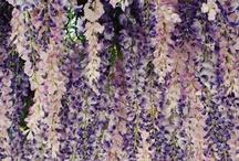 flowers / by Jen Alderette