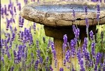 Garden Ideas / by Nicole Smith