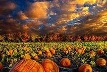 fall / by Melissa Huskins