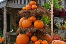 I love fall / by Dot Martin