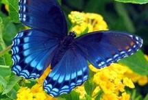 Butterflies / by Martha Banning