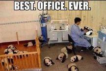 Pandas :) / by Jennifer Floyd