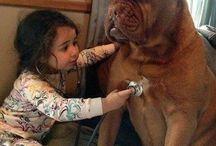 All In A Day's Work  / Veterinary medicine  / by Chauna Stinson