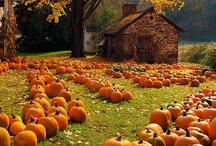 Pumpkin !!!!!! / by Tânia Sarú