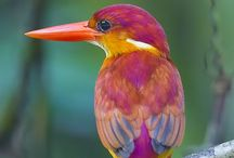 our feathered friends / by Lisa Salvo