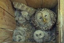 Owls! / by Janet Althoff
