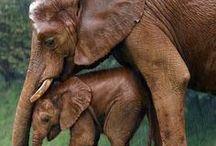   elephant chronicals   / by Jordan Loeb