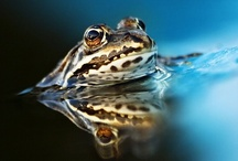 Ribbit / by Janet Althoff