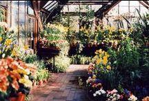   the greenhouse   / by Jordan Loeb