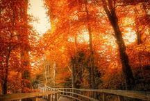 Autumn / by Roxanne Patten