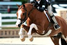 Equestrian love ♥  / by Margaret Decker Hansen