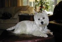 Westies & Scottie Cousins / Westie's and other Scotts / by Rita Walls