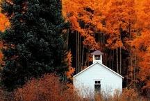 Fall / by Lindsay Warford
