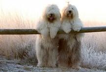 Too Doggone Cute / by Terri Mullins