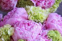 Flowers / by Terri Richards