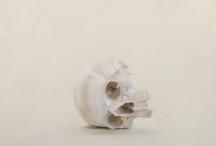 skulls / by Miguel Valiñas