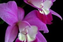 Orchids / by Nancy Watkins