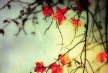 Autumn / Thanksgiving  / by Nancy Watkins