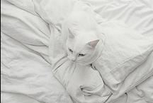 white / by christina