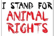 Animals NEED our help! / by Christine Ferrelli Smith