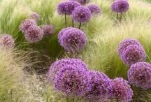 gardening / by Rosemary Nichols