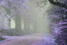 ~ Paths & Passages ~ / The Way Through / by Deby Matta DeBruycker