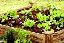 Garden stuff / by Angela Erickson