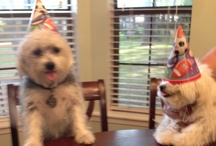 Stewie and Lulu and all things puppy / Best Morkie and Maltizu you could ask for!! / by Angie Williams