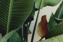 flora and fauna / nature | plants | animals / by Larissa Maria Smits