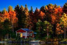 S C A N D I N A V I A / Scandinavians beauties / by Tansu Iliyaz
