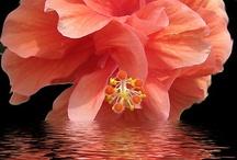 Plants & Flowers / by Zengerine