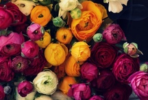 FLOWER POWER / Beautiful flowers to make your heart happy / by Barbi