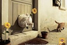 l a u g h / by Emma Gutteridge