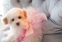 Doggone Cute / by Lorena Isabel
