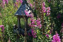 A Stroll Through My Garden ~ Spring/Summer / by ♥ Prim With Love ♥