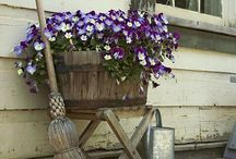 In The Garden ~ Container Gardening / by ♥ Prim With Love ♥