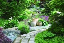 Garden Inspirations / by Darcie Seibel