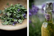 herbal alternatives / by Cynthia Robin