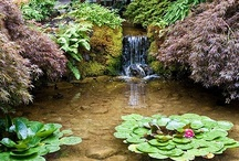Gardening - Ponds, Pools, Koi and Goldfish / Just a pretty picture
