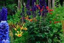 ~✿ Gardens and Landscaping (Flowers) / by jrachelle