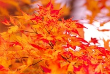 ♒ Colors of Fall / A collection of images that are reminiscent of the colors, sights, sounds and smell of the encroaching crisp, cool weather. / by jrachelle