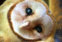 Owls / by A.D. Sams
