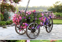 Bikes & Barrows   / by Sow & Dipity