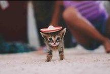Cute pics: Awww! / by Drop Dead Gorgeous Daily