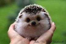 Too Cute! / by Marie Robinson