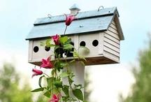 Birds, Bird Baths, Bird Houses / by sweet serenity