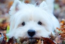 Puppy Love / by Alexa Peretz